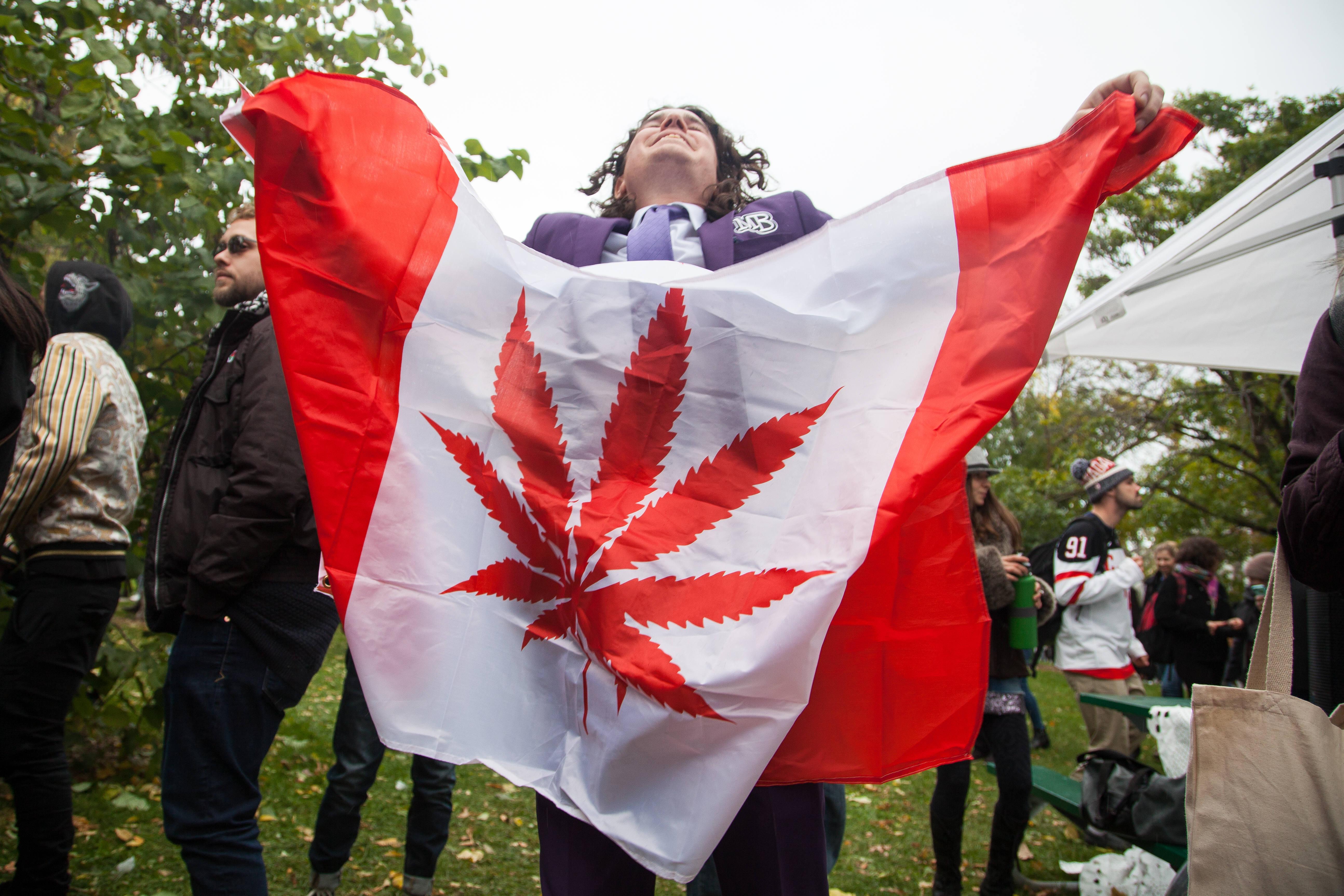 Легализация марихуана канада конопля стол 1366х768 на рабочий