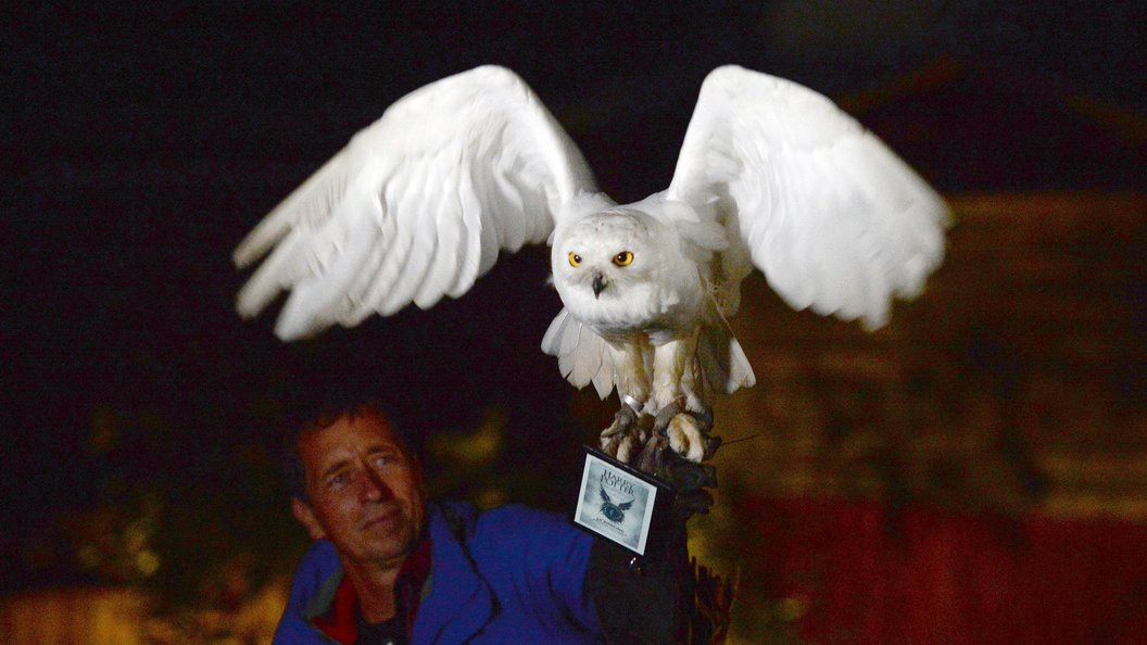 Гарри Поттер лишил Индонезию птиц-призраков
