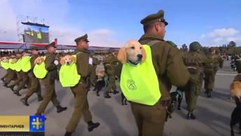 Мимимишные войска: щенки-новобранцы очаровали публику на военном параде в Сантьяго