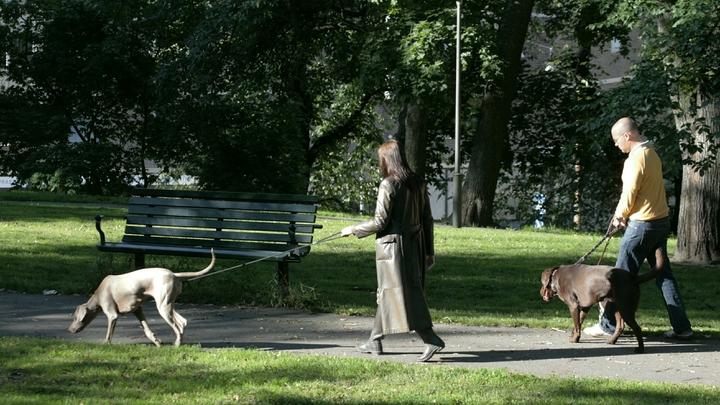 Особый путь Швеции? Единственная страна, пустившая эпидемию на самотёк, надеется на сильное общество - Spiegel