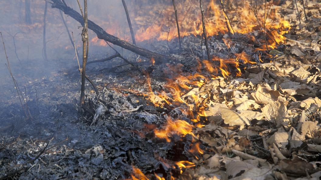 Густой дым отлесных пожаров накрыл Владивосток