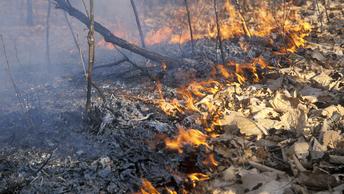 Дым от лесных пожаров во Владивостоке начнет рассеиваться в субботу