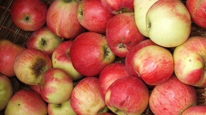 Почему в России взлетели цены на яблоки: В министерстве объяснили, добавив новых тревог