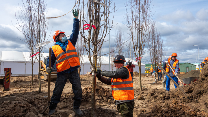 День древонасаждения в Ростовской области 15-16 октября: где пройдёт