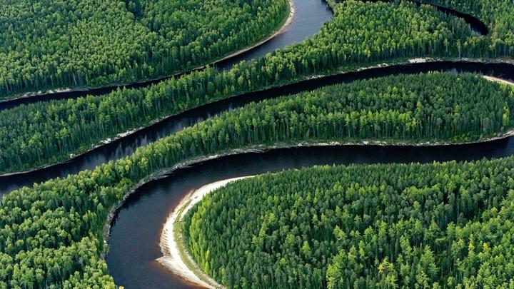Чёрных лесорубов оставят без орудий преступлений: Леса Сибири правительство защитит конфискациями