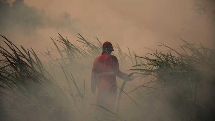 Это билет в один конец: Глава Рослесхоза признал, что не все пожары можно потушить с воздуха