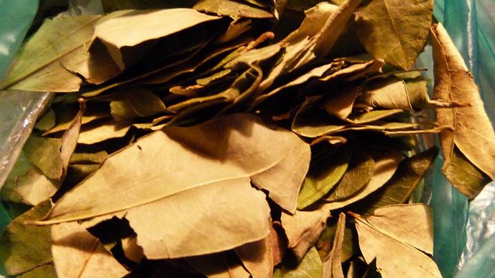 Листочек коки как символ социальной революции