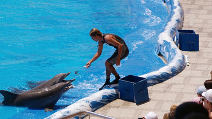 Их научили есть мертвую рыбу: Эколог о том, почему выпускать животных из китовой тюрьмы уже бессмысленно