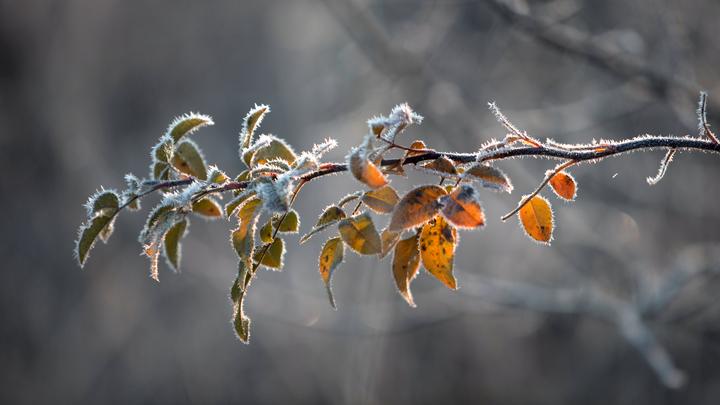 Погода в Краснодарском крае на 19-21 ноября: Кубанцам обещают снег, гололед и сильный ветер