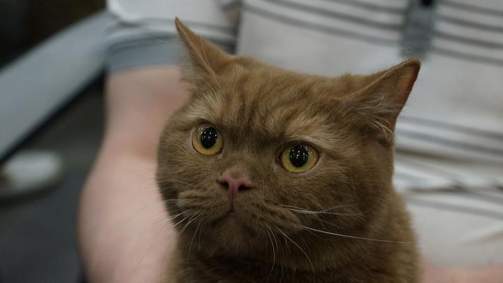 Ученые выяснили, что кошки любят хозяев не только из-за кормежки