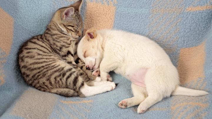 Владельцам домашних животных разъяснили вопрос о вакцинации пушистых от COVID-19