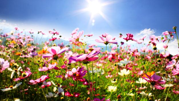 Лето будет аномальным… в разумных пределах
