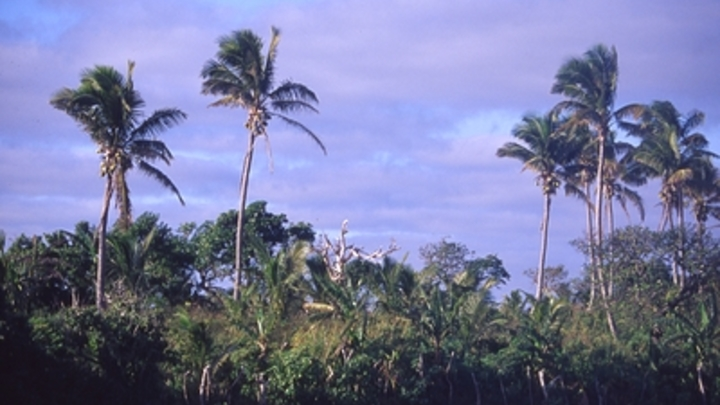 Глава Роскачества о борьбе с пальмовым маслом: Закон о защите прав потребителей работает