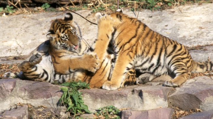 Массовое вымирание Названа причина резкого сокращения численности диких животных