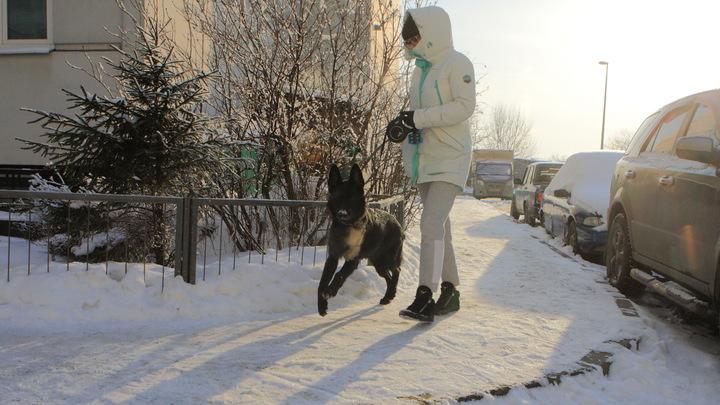 Суд обязал мэрию Новосибирска определить места для выгула собак