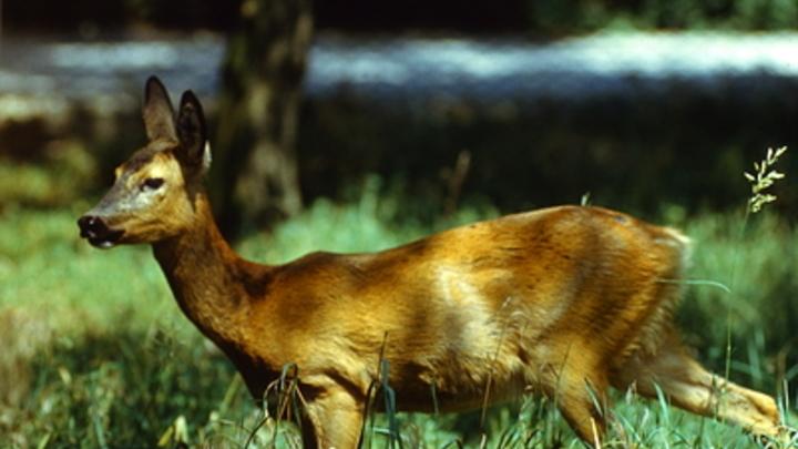 В Зауралье у браконьера отобрали автомобиль и заставили заплатить штраф
