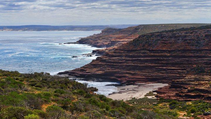 Мозг в окружении черных щупалец: В Австралии на берег выбросило новое морское чудовище - фото