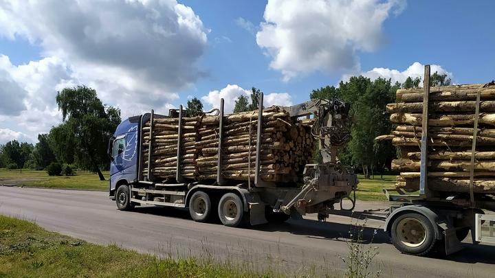 Это всё они! В Приморске рубят лес гектарами и переводят стрелки на местных жителей
