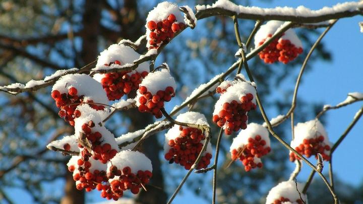 Снег и минусовая температура ожидаются в Новосибирской области на выходных