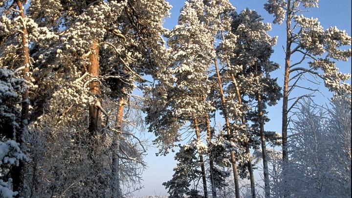 Наступление весны в Москве перенесли на апрель