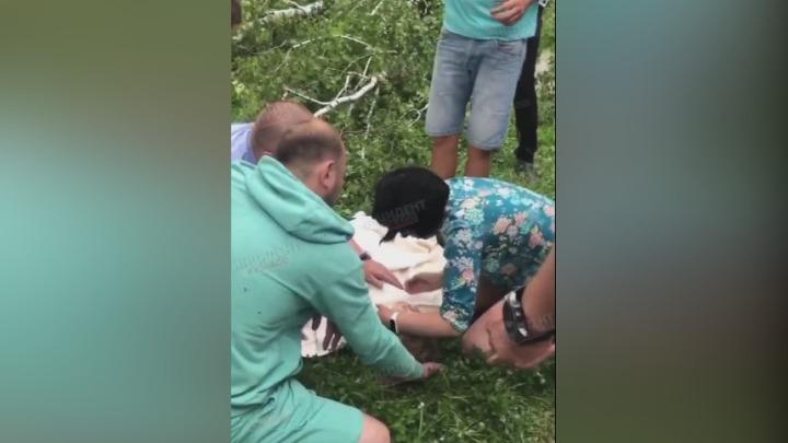 В Новокузнецке на мужчину и ребенка упало дерево