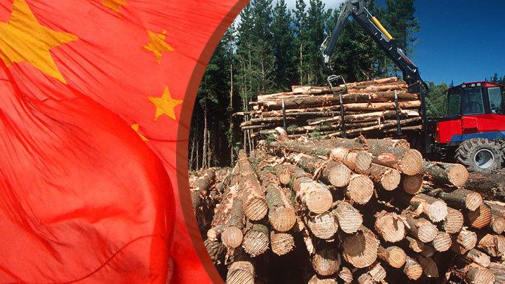 Русская древесина для Китая: История одной диверсии