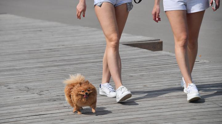В Новосибирске бойцовский пёс откусил лапу маленькой собаке и поранил её хозяйку