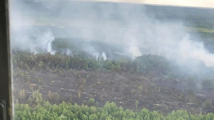 Прекратите врать: Зона отчуждения Чернобыля в огне уже неделю - пожар подбирается к АЭС