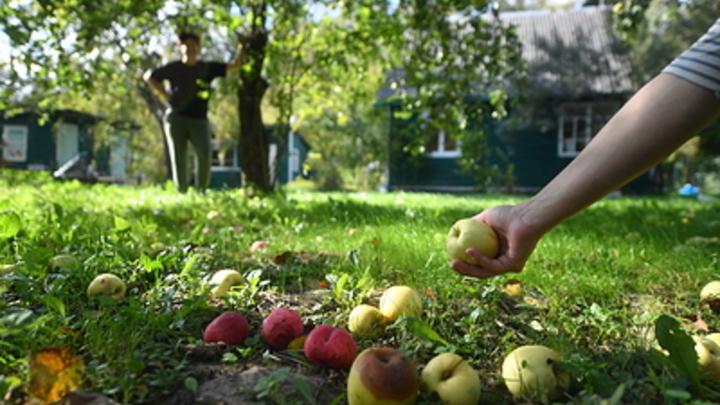 Депутаты хотят поддержать садоводов. Пострадать могут нацпарки