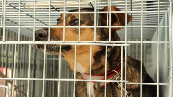 За год в Краснодаре хотят стерилизовать тысячу бродячих животных