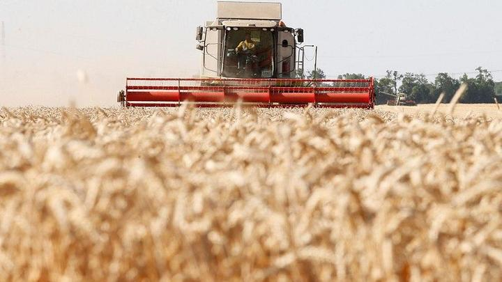 На Кубани началась уборка пшеницы