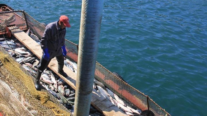 Россия и Япония будут вместе ловить рыбу и развивать туризм на Курилах