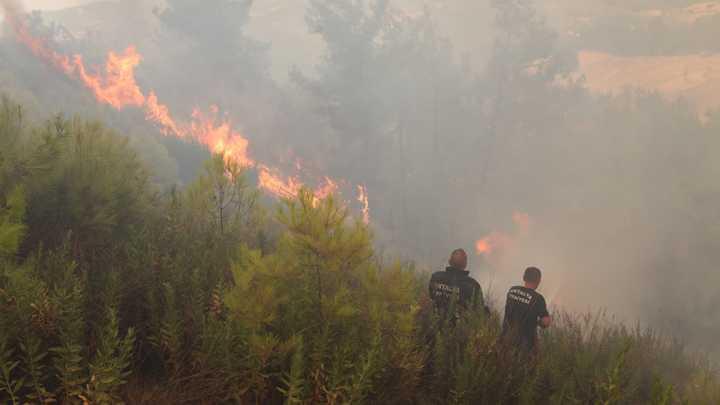 Турция взяла под контроль ситуацию с пожарами. Эрдоган сказал отдельное спасибо России