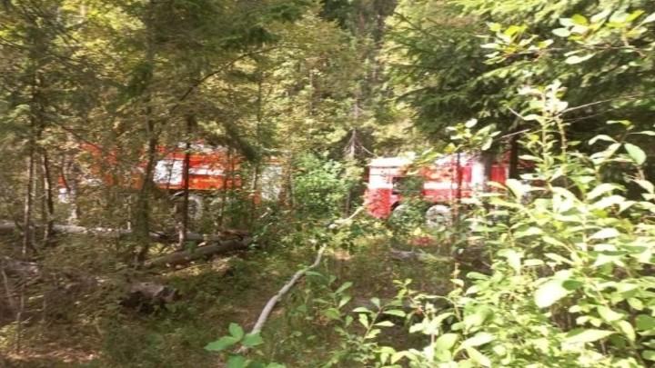 В двух районах Ивановской области загорелись леса