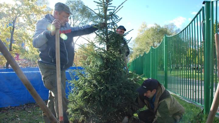 В Челябинске пересчитают все деревья