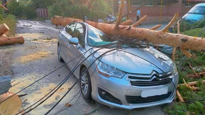 Водитель чудом остался жив: в Тольятти дерево упало на дорогой Citroën