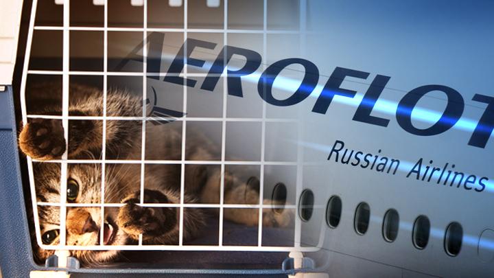Я-мы толстый кот: Интернет ополчился на «Аэрофлот» из-за скандала с четвероногим Виктором