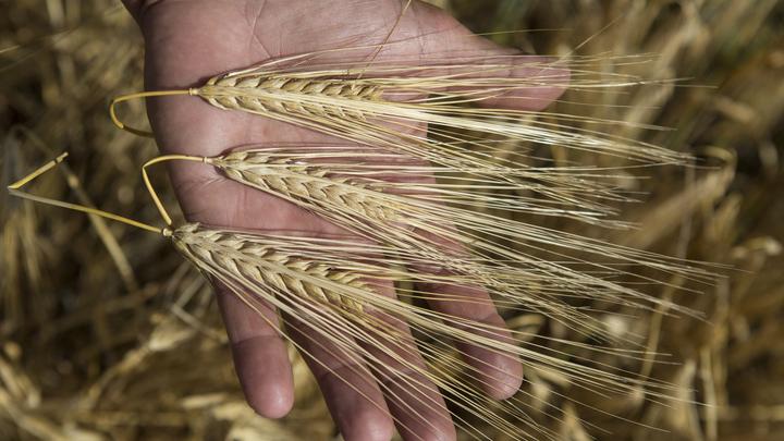 Китай снял многомесячный запрет на ввоз российской пшеницы