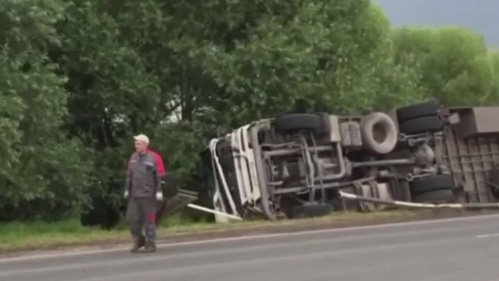 Свиньи из перевернувшегося грузовика разбежались по дороге после ДТП в Кузбассе