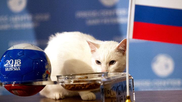 Кот, олень и выдра: Кто помог победить сборной России