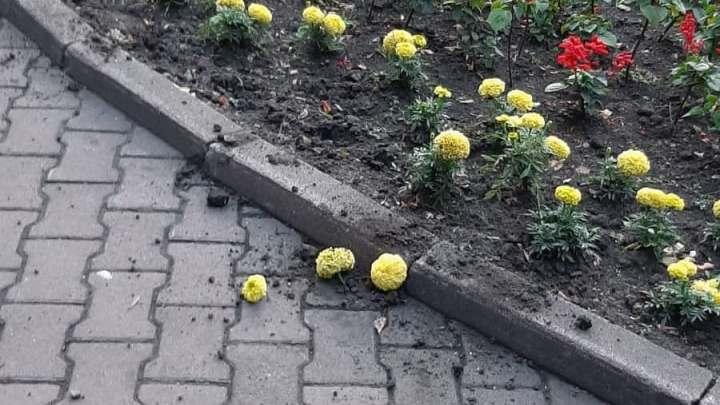Мэр кузбасского города отчитал вандалов, которые разгромили клумбы в парке