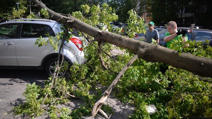 Виноваты горожане: Власти Ростова рассказали, кто мешает спиливать аварийные деревья