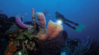Учёные выяснили, что убивает кораллы в Азиатско-Тихоокеанском регионе