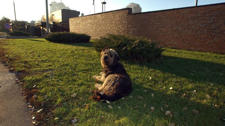 Взявшая беспризорного пса-холерика женщина рассказала, как сделать из собаки друга, после случая с москвичом, выбросившим питомца