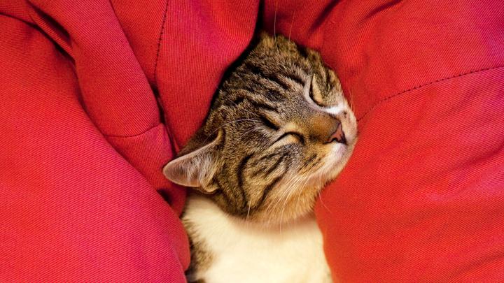 Эксперт рассказал, как худеть во сне, чтобы вес не возвращался - спать надо легко