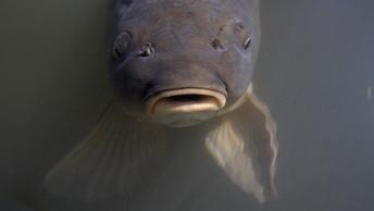 На Курилах поймали рыбу-монстра, который весит больше тонны
