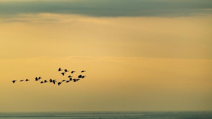 Канадцы описали первый в мире гибридный подвид птиц