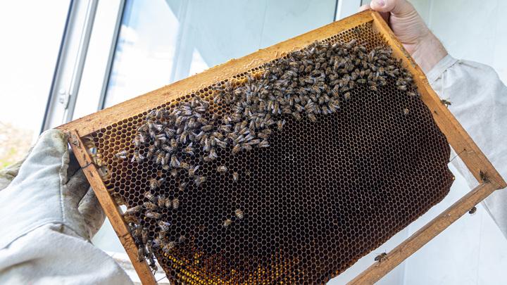В Башкирии массово вымирают пчёлы, а чиновники не видят проблемы