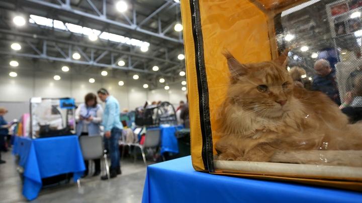 Таможенник Шереметьево брал мзду за котов
