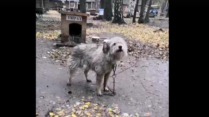 Новокузнецкий приют из-за безденежья вместо усыпления выпустит собак